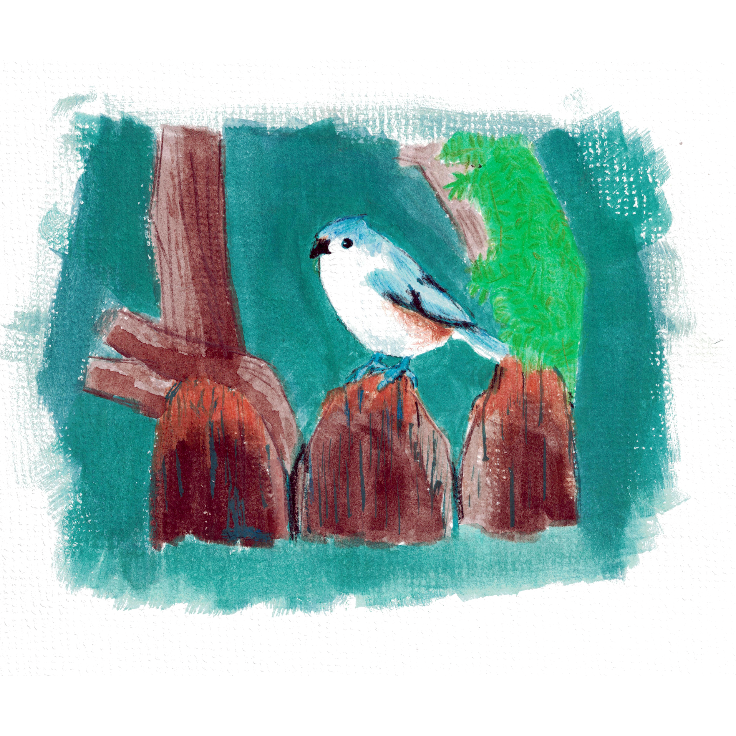 Drawing of a Tufted Titmouse on a fence