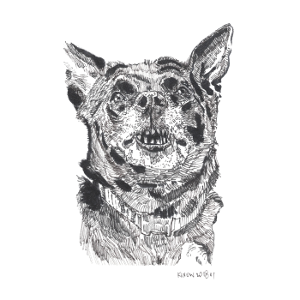 A black and white drawing of a dog showing its teeth/fangs